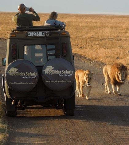 Classic Wildlife Safari